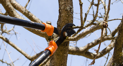 tree pruning in Toledo, OH